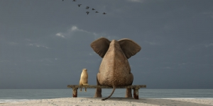 An elephant sitting on a bench with a friend on the beach